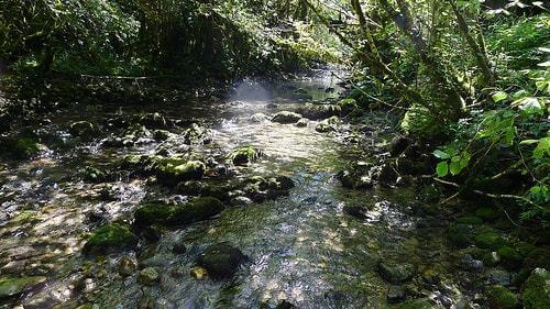 Petit cours d'eau en amazonie