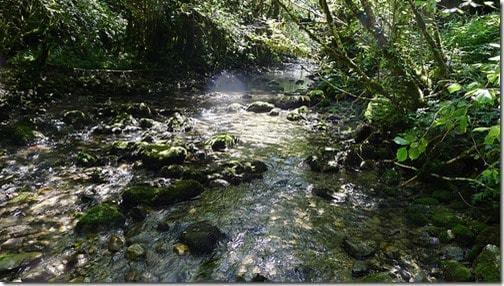 Un cours d'eau de la forêt amazonienne - Amazonie