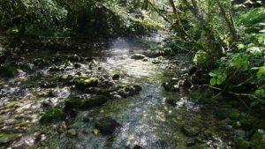 Un mois en forêt amazonienne : une expérience pas comme les autres