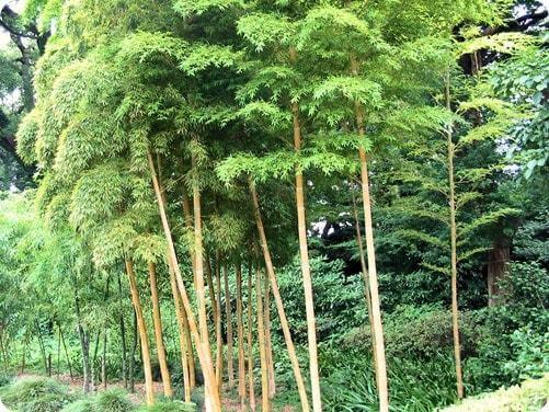 Comment atteindre ses objectifs ? le bambou et la persévérance
